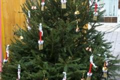 Baum Nr. 14