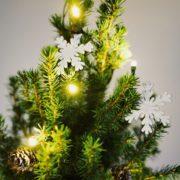 Zweibrücker schmücken ihre städtischen Weihnachtsbäume
