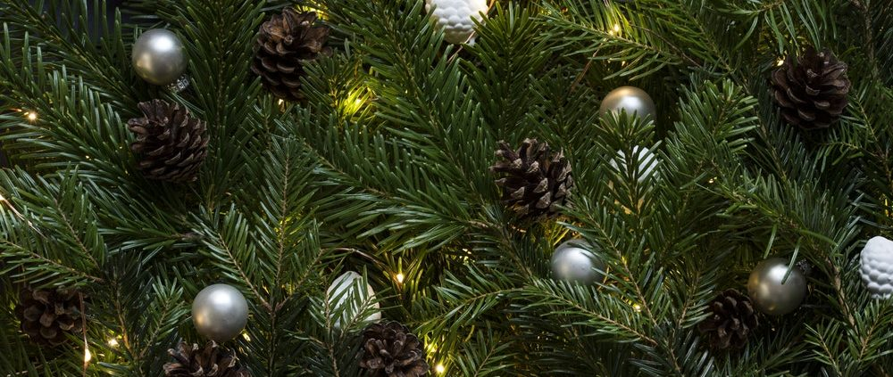 Weihnachtsbäume in der Zweibrücker Innenstadt